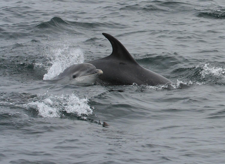 Baby dolphin on wildlife trip
